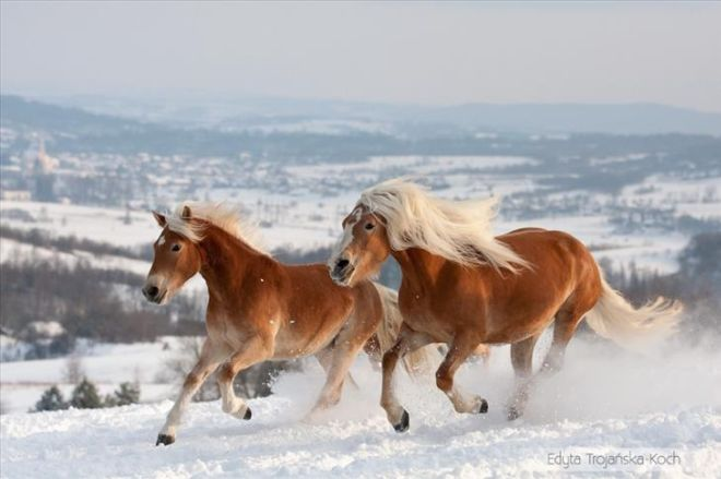 World's 15 Most Beautiful Horse Breeds