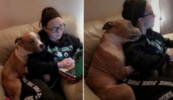 Dogs That Don't Understand The Meaning Of Personal Space