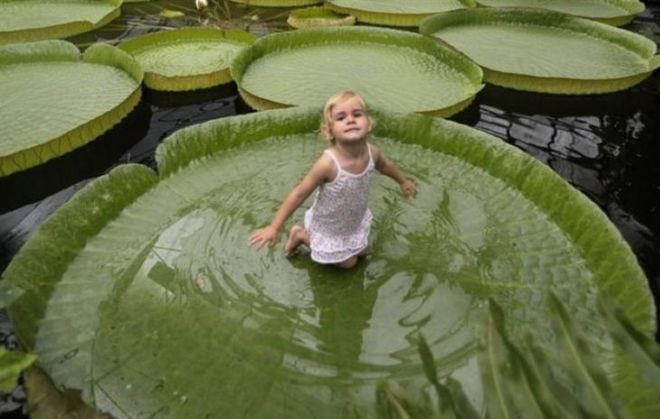 15 Surprising Plants Around The World