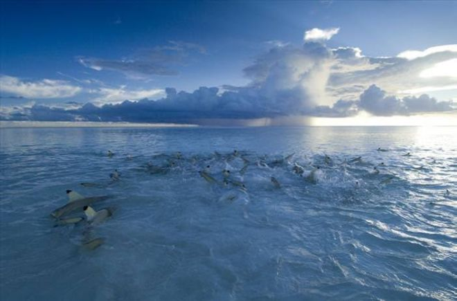 Have You Heard Of Aldabra? A Hidden Gem You Need to See!