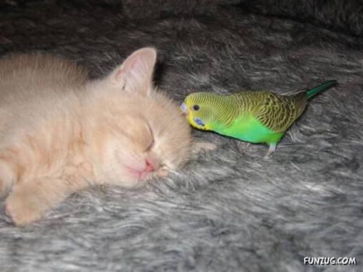 So Cute and Unusual Friendship